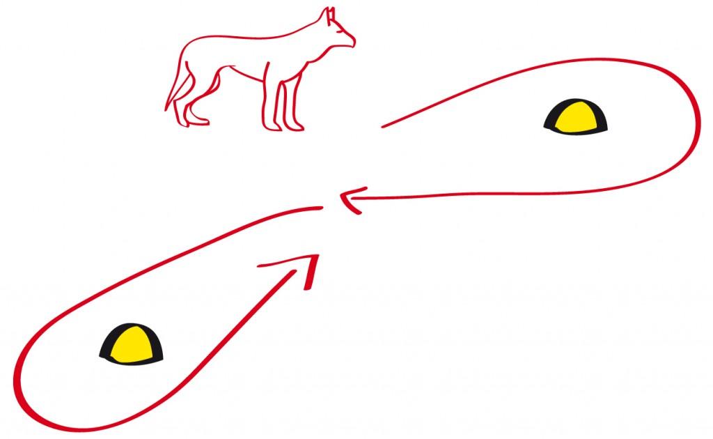 Der Hund läuft ausgehend von seiner Position in der Mitte der Pylonen eine 8 um die Pylonen