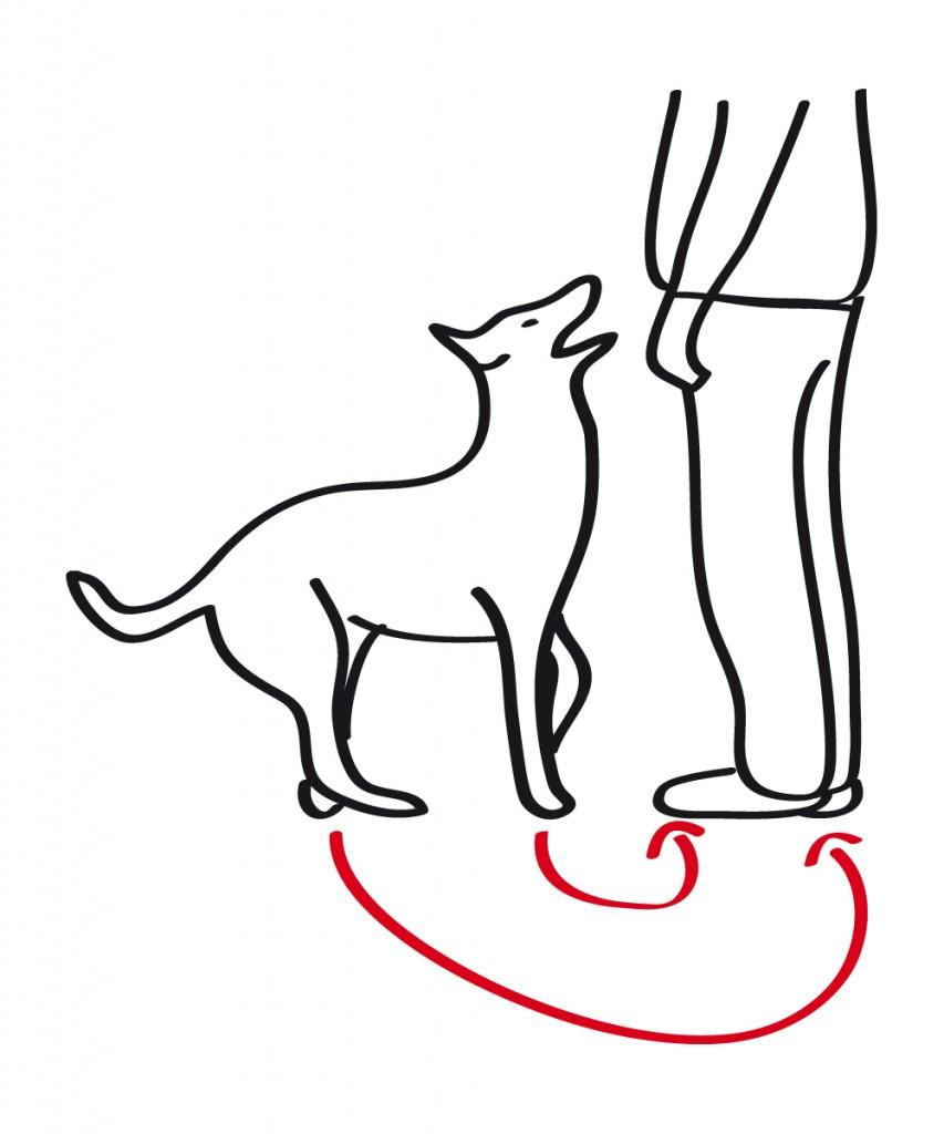 Skizze eines Hundes der die Grundstellung mit 180°-Grad-Wendung einnimmt.