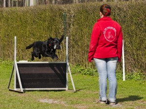 Metallapport über die Hürde in Obedience Klasse 3, Lion