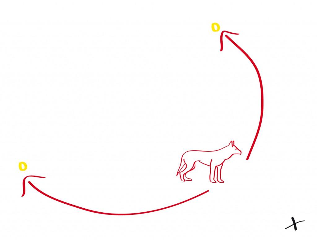 Der Hund steht nun mittig vor den Targets