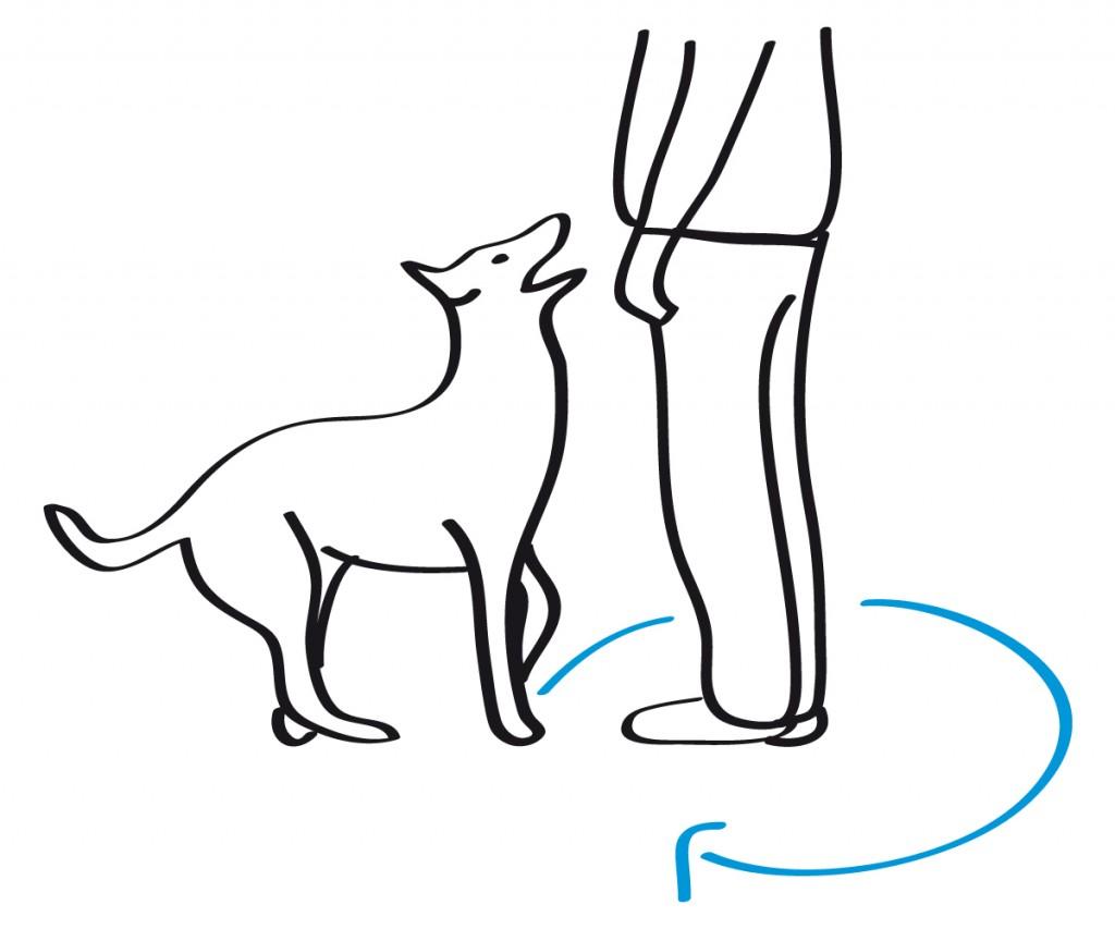Skizze eines Hundes, der aus dem Zulauf den Hundgeführer umrundet, um die Grundstellung einzunehmen
