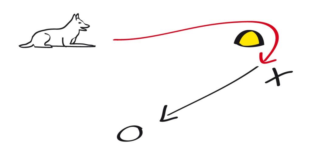 Der Hund läuft Richtung Pylo, umrundet diesen und wird dann vom HF, der neben dem Pylo steht bestätigt
