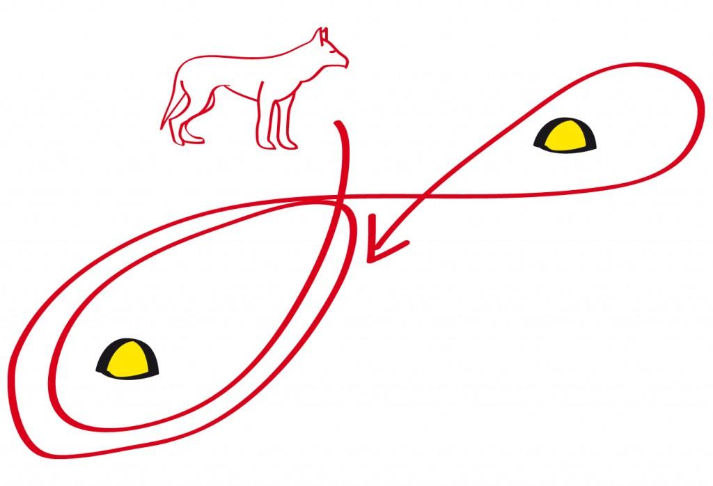 Der Hund wird nun völlig variabel mal nach links und mal nach rechts geschickt auch mehrmals um den gleichen Pylo
